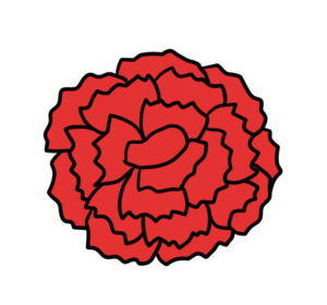 カーネーション 正面 フリー素材 母の日 赤