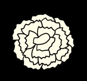 カーネーション 正面 フリー素材 母の日 白