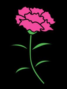 カーネーション フリー素材 母の日 ピンク