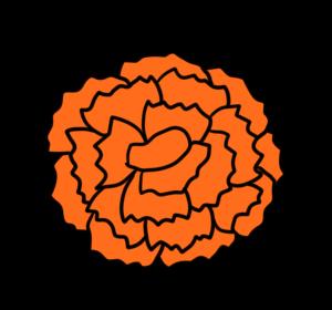 カーネーション 正面 フリー素材 母の日 オレンジ
