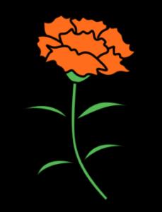 カーネーション フリー素材 母の日 オレンジ