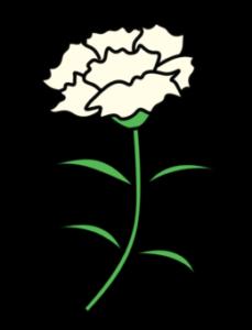 カーネーション フリー素材 母の日 白