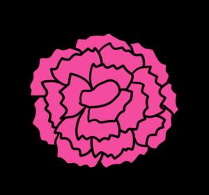 カーネーション 正面 フリー素材 母の日 ピンク