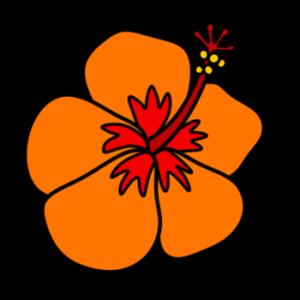 ハイビスカス フリー素材 夏 オレンジ