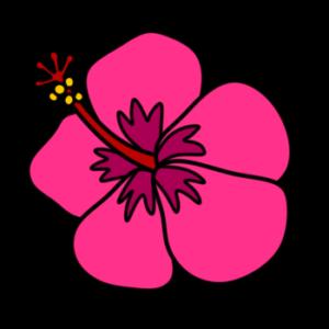 ハイビスカス フリー素材 夏 ピンク