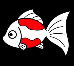 金魚 フリー素材 夏イラスト 無料 赤白