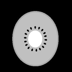 キウイ 白黒フリー素材 カット 断面